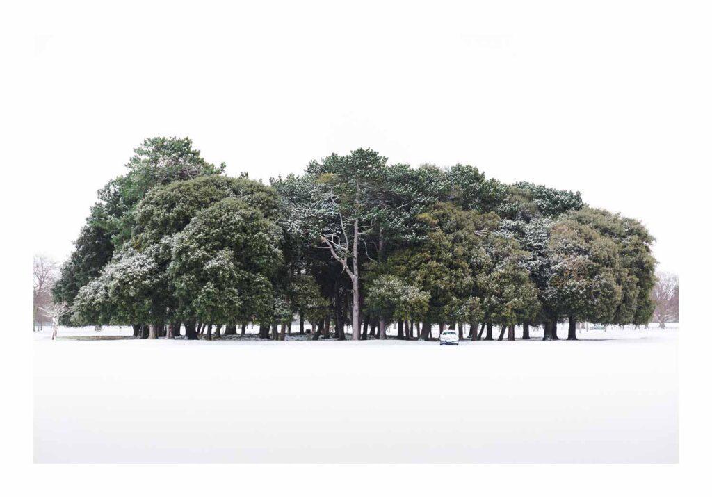 Trees, Emma I