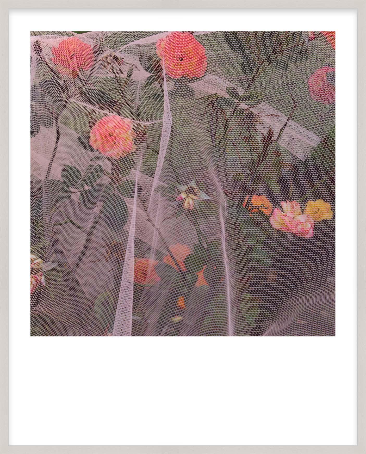 Hang Tough 'Nectarine' Slip Mounted in Limed Ayous (Framing Only)