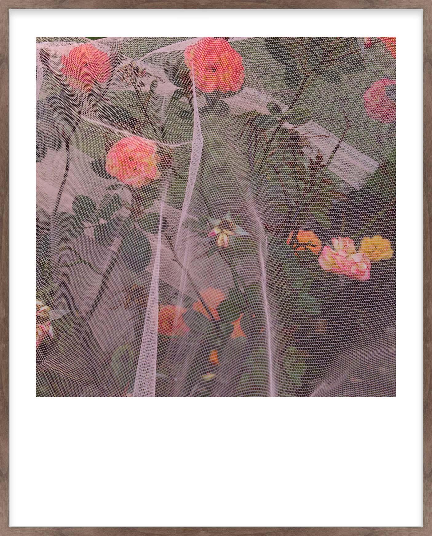 Hang Tough 'Nectarine' Slip Mounted in Walnut (Framing Only)