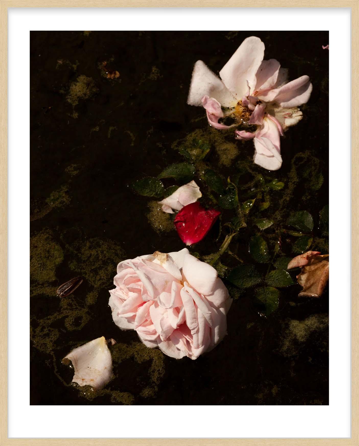 Hang Tough 'Roses, Sludge' Slip Mounted in Raw Ayous (Framing Only)