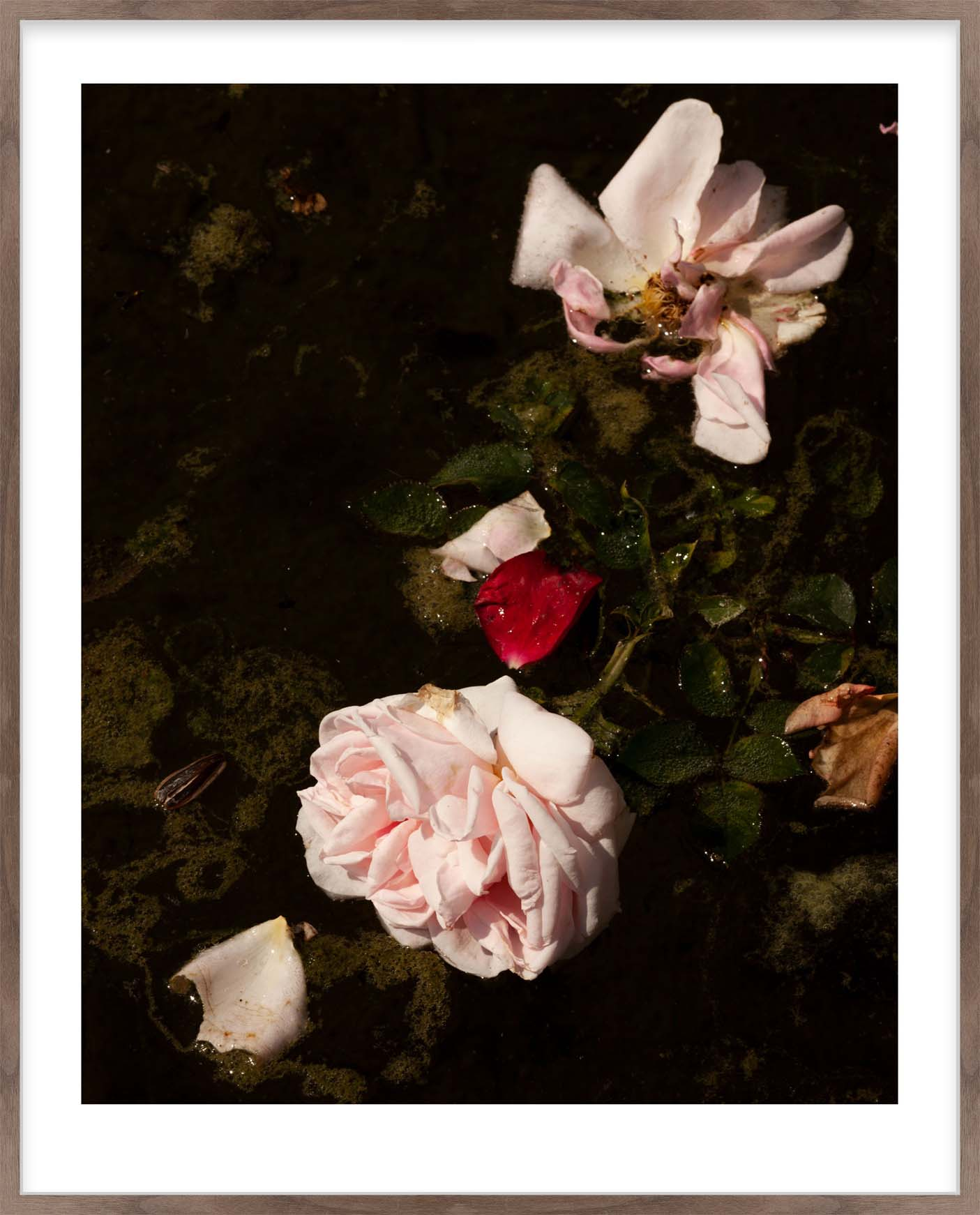 Hang Tough 'Roses, Sludge' Slip Mounted in Walnut (Framing Only)