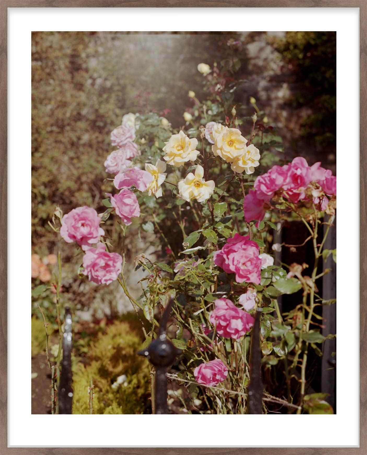 Hang Tough 'Garden Roses' Slip Mounted in Walnut (Framing Only)