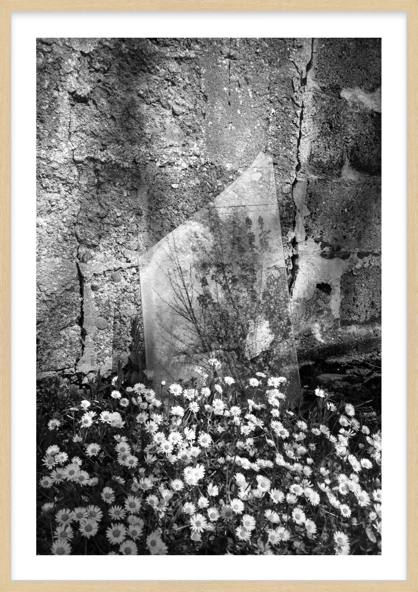 Hang Tough 'White Daisy' Slip Mounted in Raw Ayous (Framing Only)